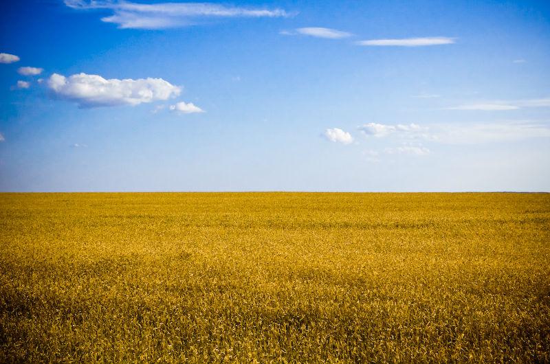 Making Ukraine the Breadbasket of Europe Again