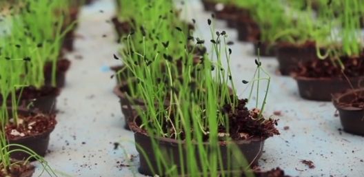 Bustan Aquaponics: An Answer To Egypt's Water Scarcity? [Video]