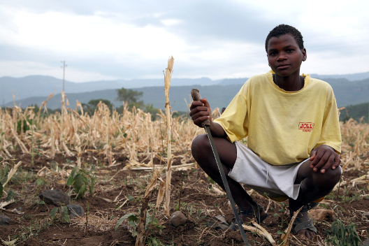 3,000 Miles from Paris Climate Talks, Drought Threatens to Overshadow Progress in Ethiopia