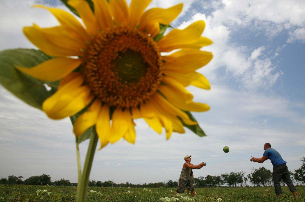 The Right Land Reform Could Transform Ukraine Now