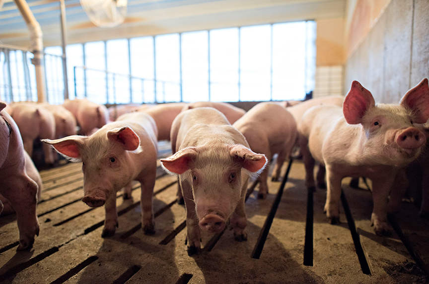 Pork with a Side of Tariffs