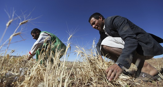 Climate-resilient small farming communities vital to MENA food security