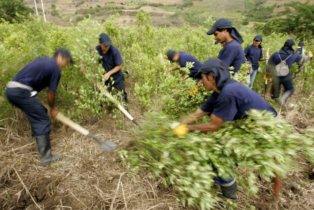 Workers eradicate coca leaf plantations as part of a government counter-narcotics program in El Peñol, Nariño, Colombia. The United States should continue its support of Colombia as it works to fight coca cultivation and drug trafficking. (REUTERS/Jose Miguel Gomez)
