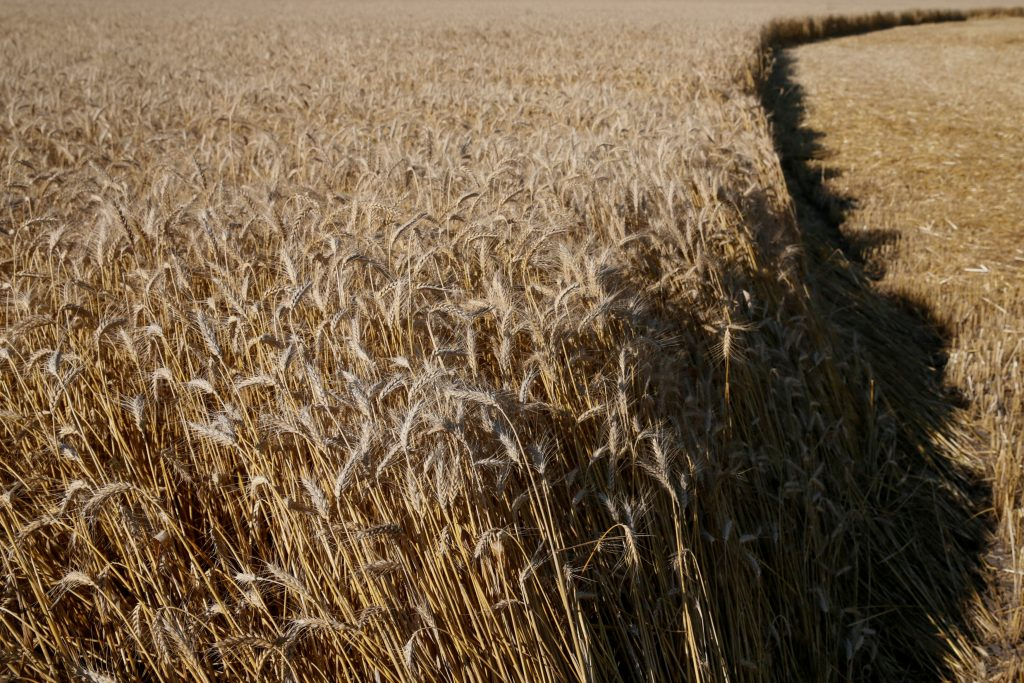 Ukraine is finally ready to embrace land reform