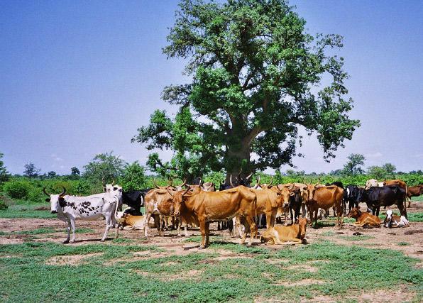 N'oublions pas le pastoralisme dans l'agenda climatique