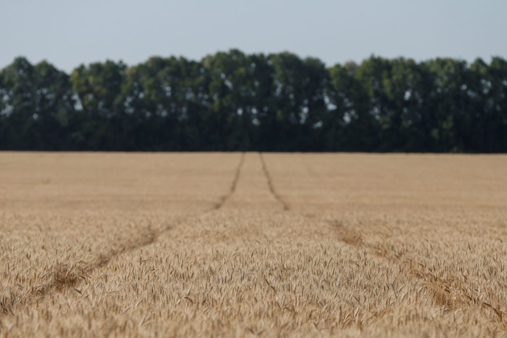 Ban on farmland sales to foreigners risks starving Ukraine of investment
